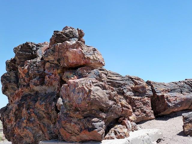 คด ไม้กลายเป็นหิน