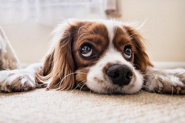 รวมคาถากันหมา คาถาป้องกันสุนัข คาถากันสุนัข