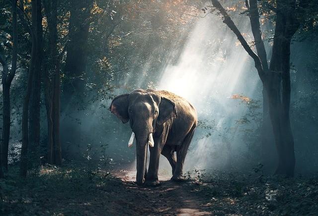 เอกลักษณ์เฉพาะแห่งพญาช้างมีลักษณะ 7 ประการ
