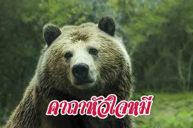 คาถาหัวใจหมี